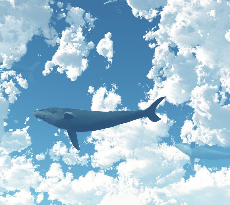 クジラの画像 p1_9