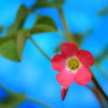 Cute Pink Flower Androidスマホ壁紙