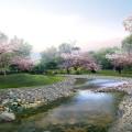 桜咲く川沿い Androidスマホ壁紙