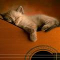 ギター&猫 Androidスマホ壁紙