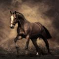 栗毛の馬 スマホ壁紙