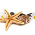 ヒトデと貝殻と花 スマホ壁紙