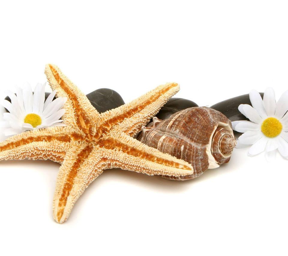 ヒトデと貝殻と花 スマホ壁紙 Wallpaperbox