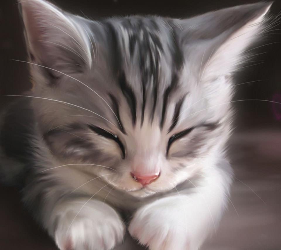 かわいい三毛猫 スマホ壁紙