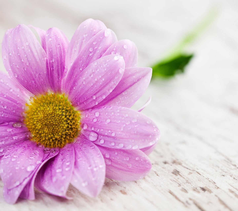 Pinky Flower Androidスマホ用壁紙