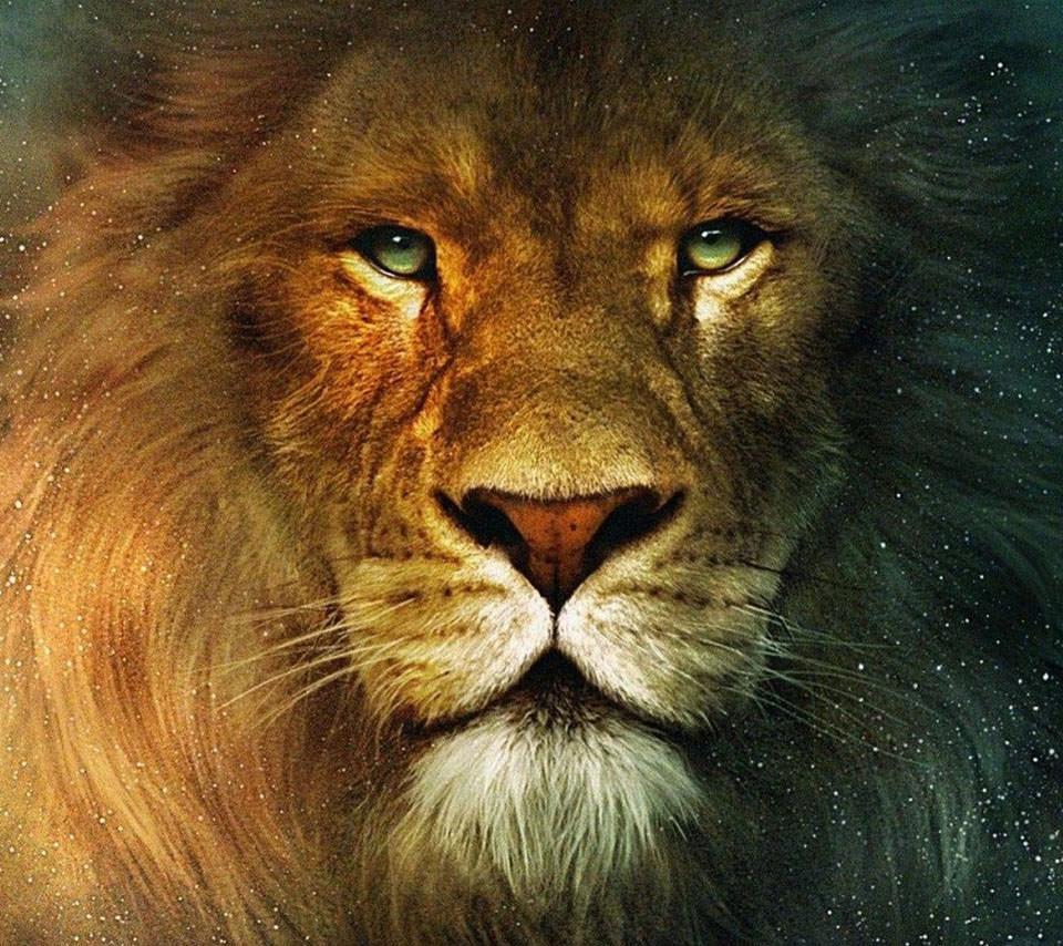 ライオンと宇宙 スマホ壁紙