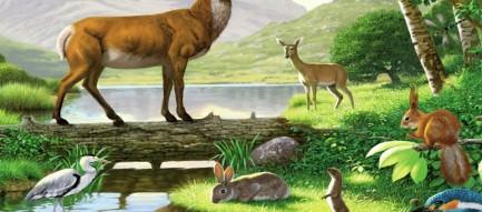 野生動物 スマホ壁紙