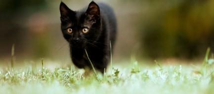 散歩中の子猫 スマホ壁紙