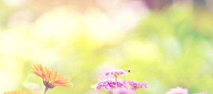 ピンクとオレンジの花壇 スマホ壁紙