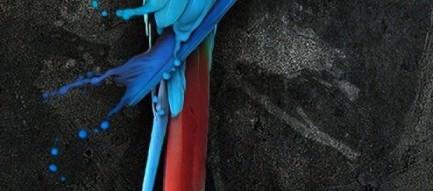 カラフルなオウム iPhone5 スマホ用壁紙