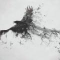 飛翔するカラス Androidスマホ用壁紙