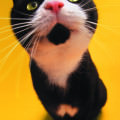 立ち上がる黒ブチ猫 iPhone5 スマホ用壁紙