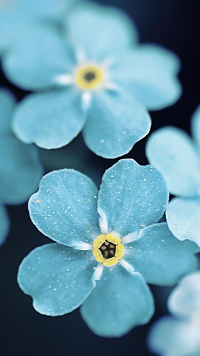 綺麗な青い花 iPhone5 スマホ用壁紙