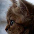 外をじっと見る子猫 iPhone5 スマホ用壁紙