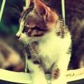 タイヤと猫 iPhone5 スマホ用壁紙