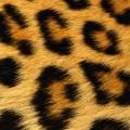 豹柄のファー iPhone5 スマホ用壁紙