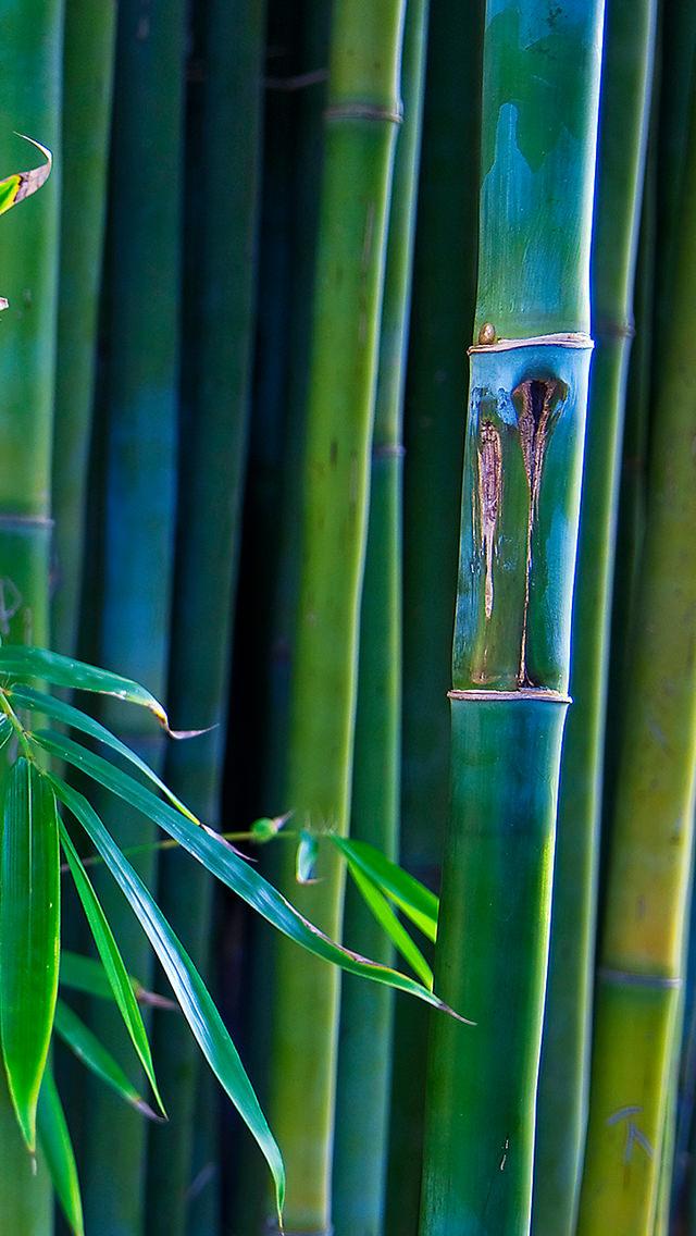 和を感じる竹林 iPhone5 スマホ用壁紙