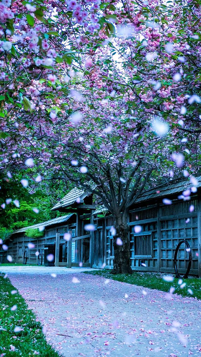 花びら舞う風景 iPhone5 スマホ用壁紙