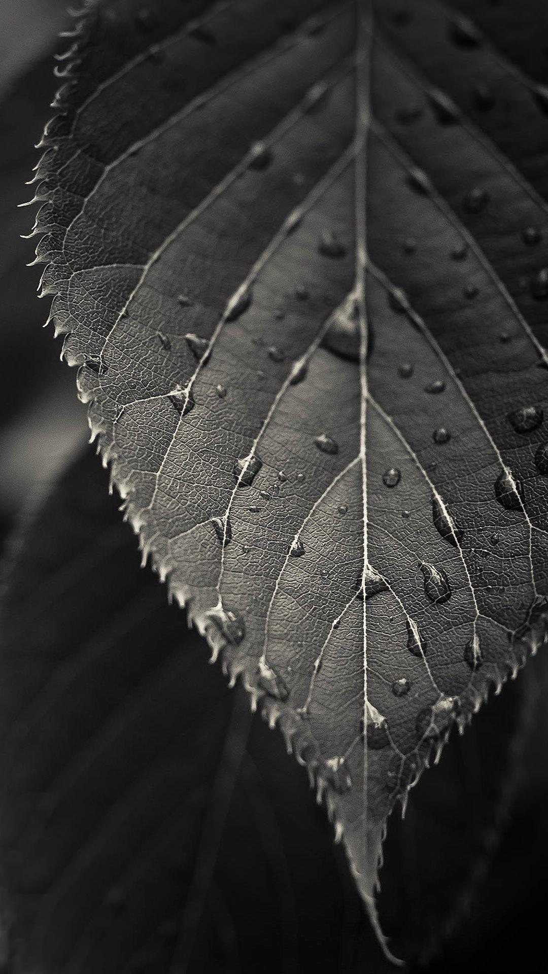 綺麗なモノクロの葉 iPhone6 Plus 壁紙