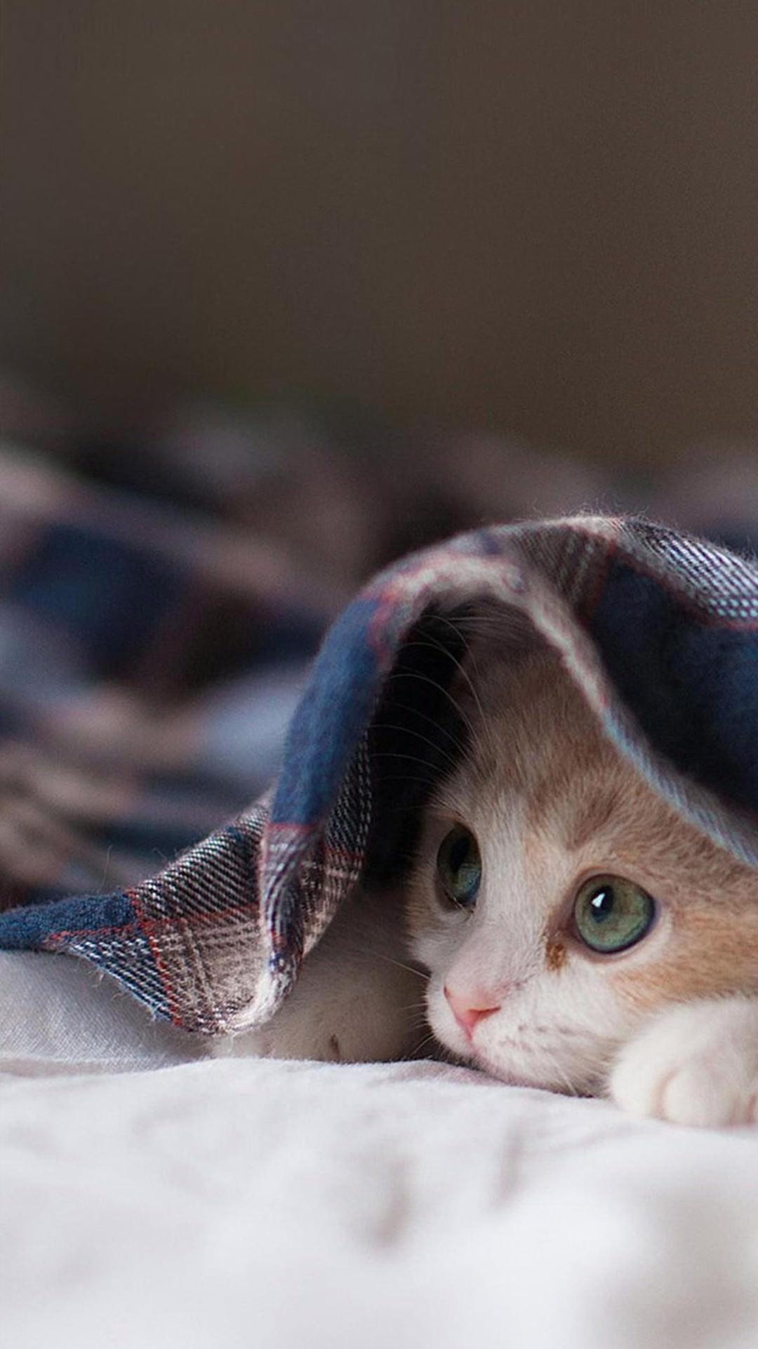 布にくるまった子猫 iPhone6 Plus 壁紙