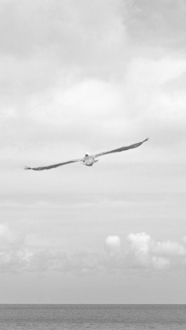 羽を広げた一羽のカモメ iPhone5 壁紙