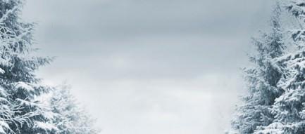 冬の針葉樹 iPhone5壁紙