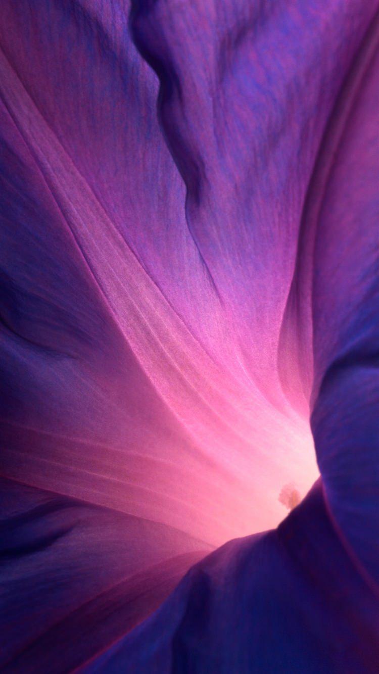 アサガオの花びら iPhone6 壁紙