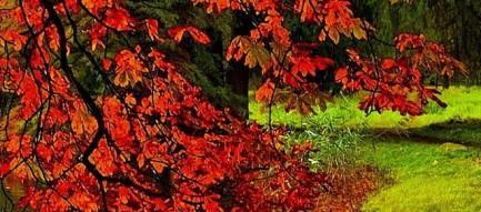 紅葉と落ち葉 iPhone5壁紙
