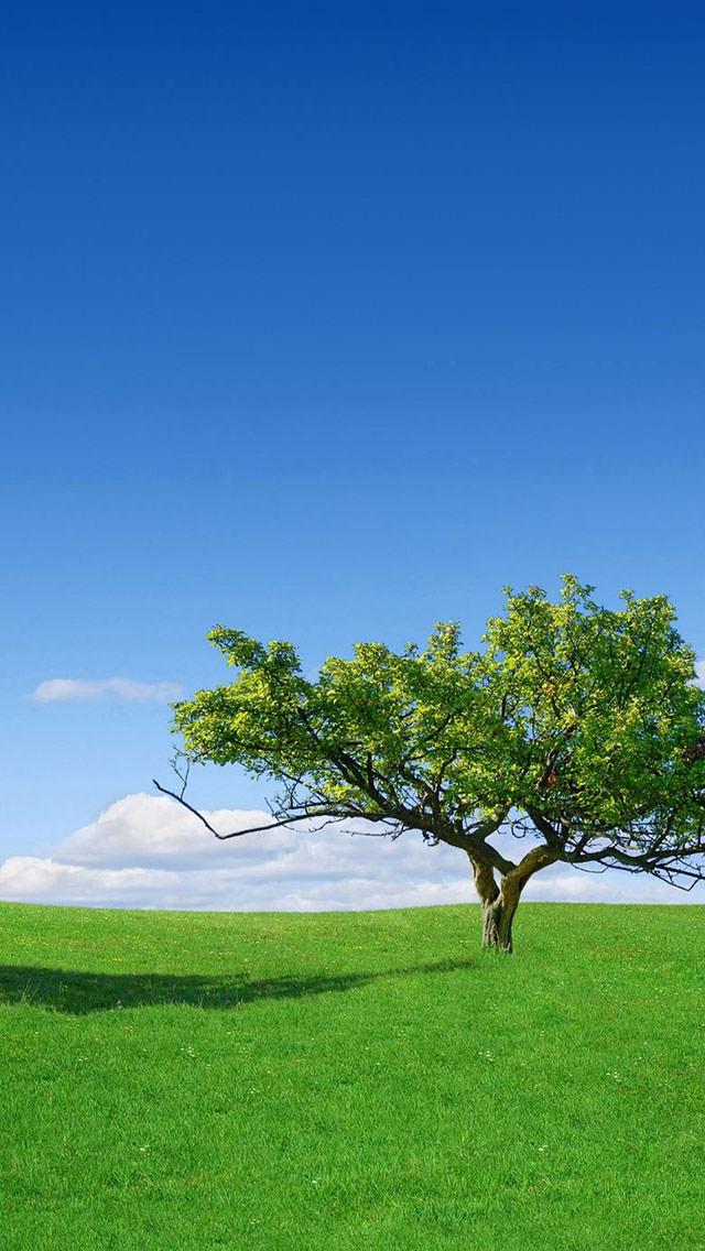 草原と大きな木 iPhone5壁紙