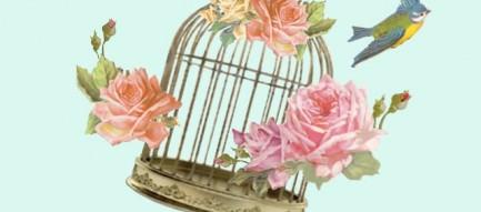 鳥かごから飛び立つ小鳥 iPhone5壁紙