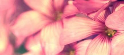 Beautiful Pink Flower iPhone5壁紙