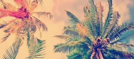 ワイハの椰子の木 iPhone5 壁紙