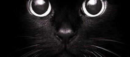 黒猫 iPhone6壁紙