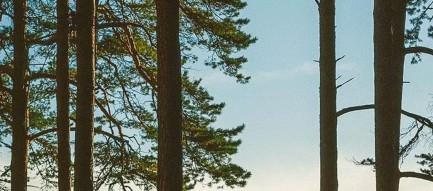 湖畔と森 iPhone6 Plus壁紙