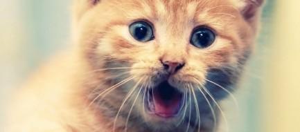 威嚇する子猫 Android壁紙