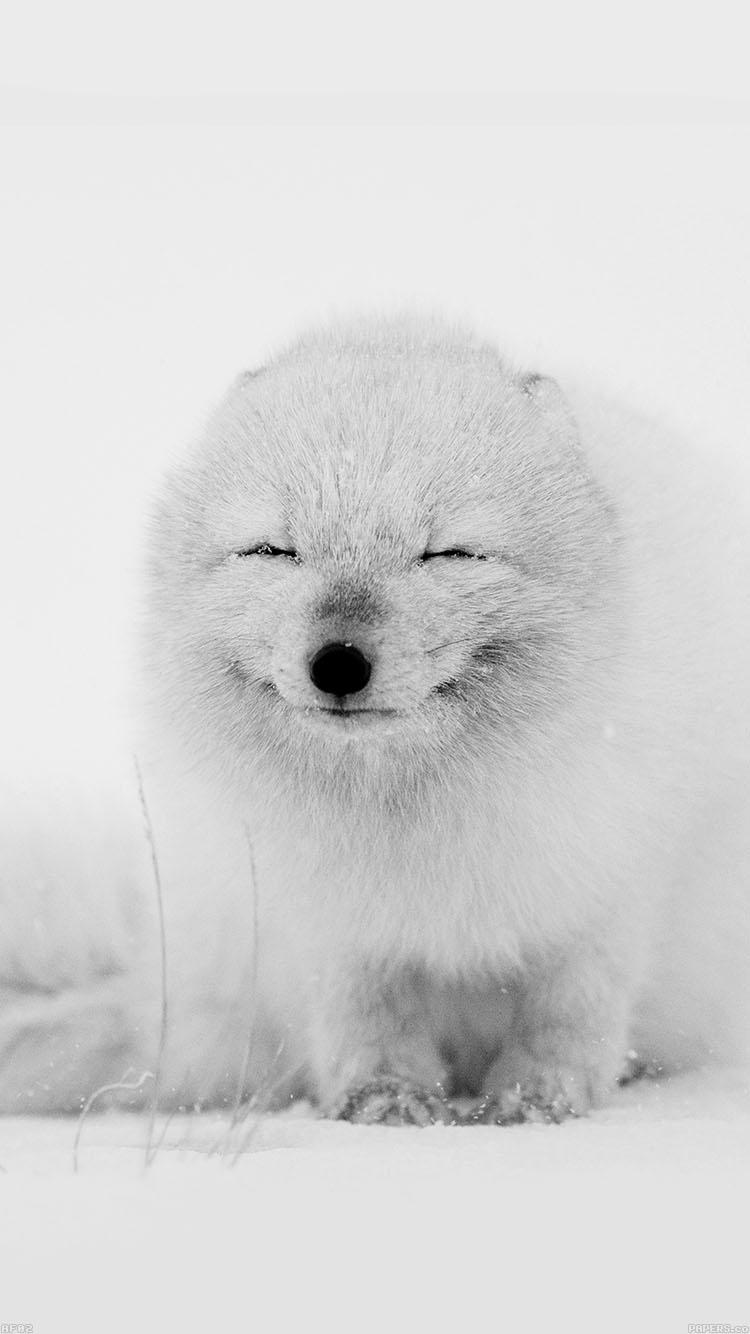 目を閉じた犬 iPhone6壁紙