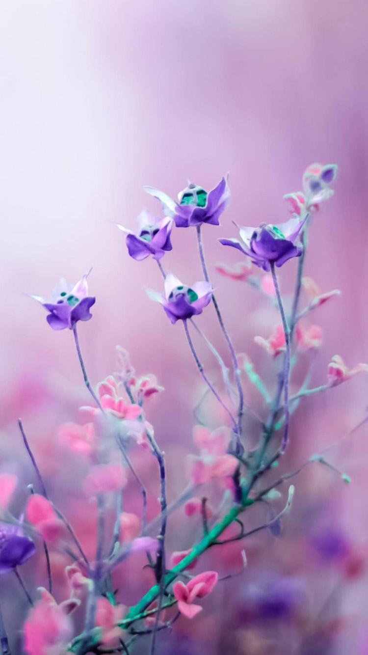 紫とピンクの花 iPhone6 壁紙