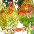 マリメッコ オウム iPhone6壁紙