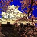夜桜と天守閣 iPhone6壁紙