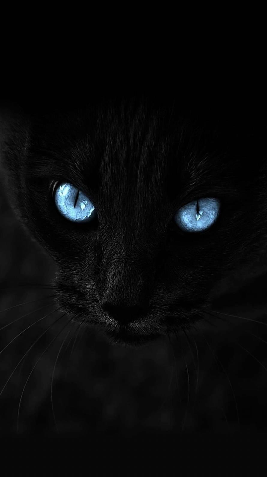 凛々しい黒猫 iPhone6壁紙