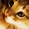 ライトアップされた猫 iPhone6壁紙
