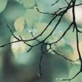 葉の少ない枝 iPhone6壁紙