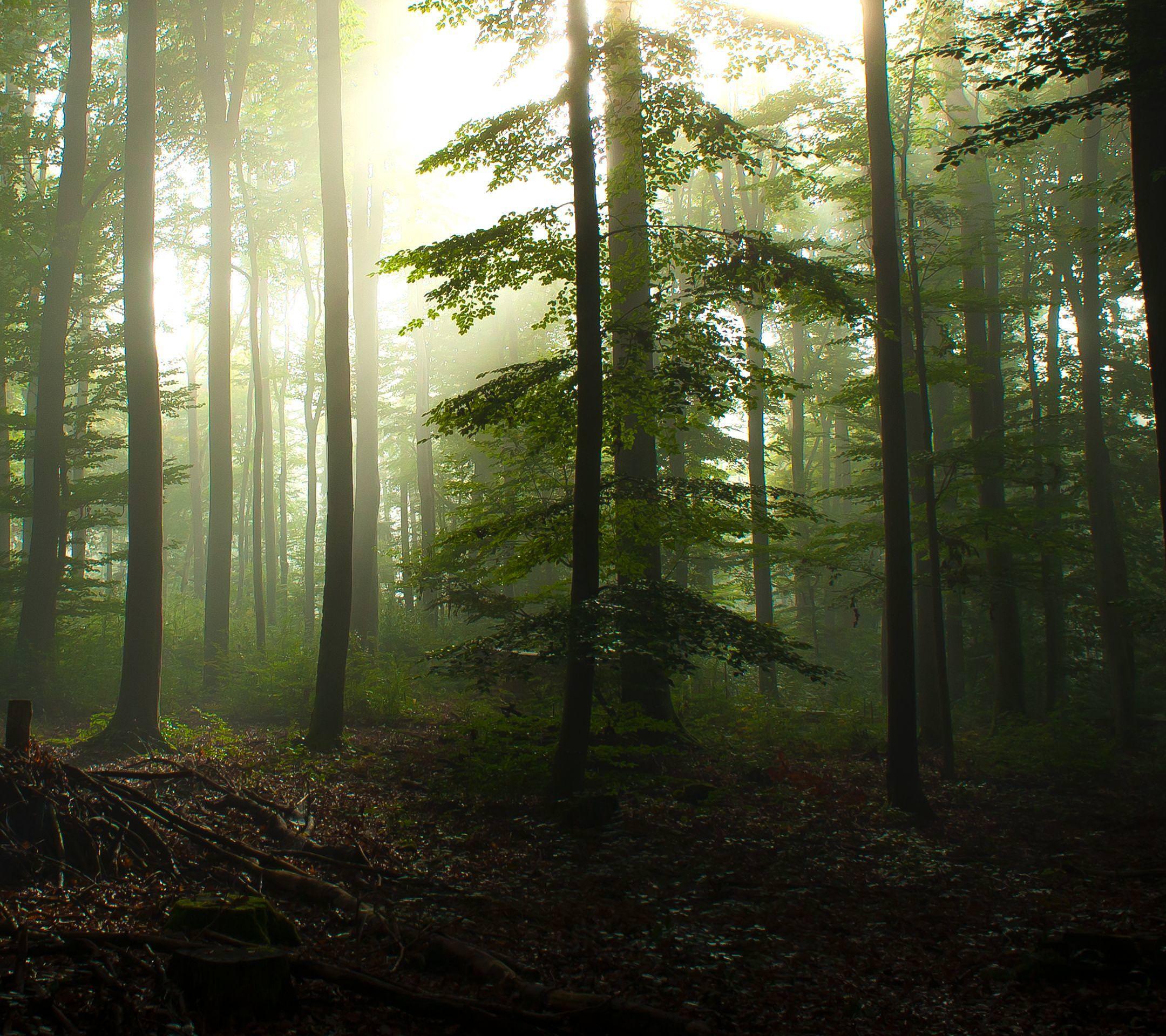 森林 Android壁紙