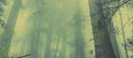 大木が乱立する森 iPhone6 壁紙