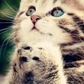 お願いする猫 iPhone6壁紙