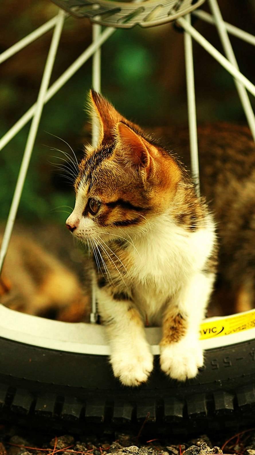 車輪と子猫 iPhone6壁紙