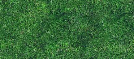 芝生 iPhone6 壁紙