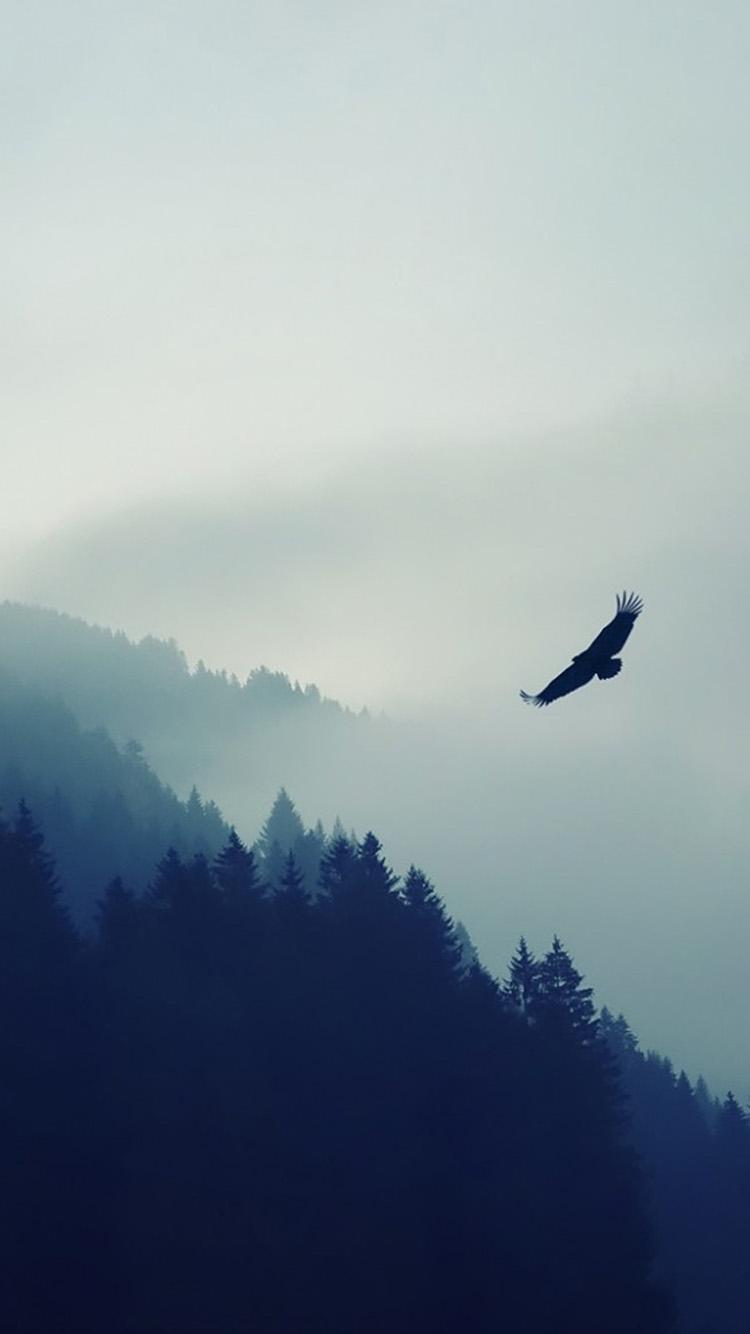 霧が立ち込める森と空飛ぶ鷲 iPhone6 壁紙