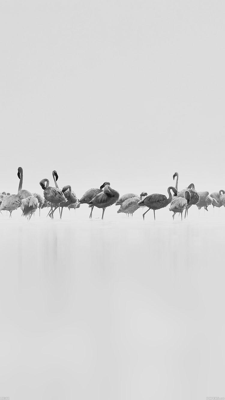 フラミンゴの群れ iPhone6壁紙