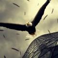 滑空する鷲 iPhone6壁紙